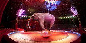 L'Irlande interdit les animaux sauvages dans les cirques