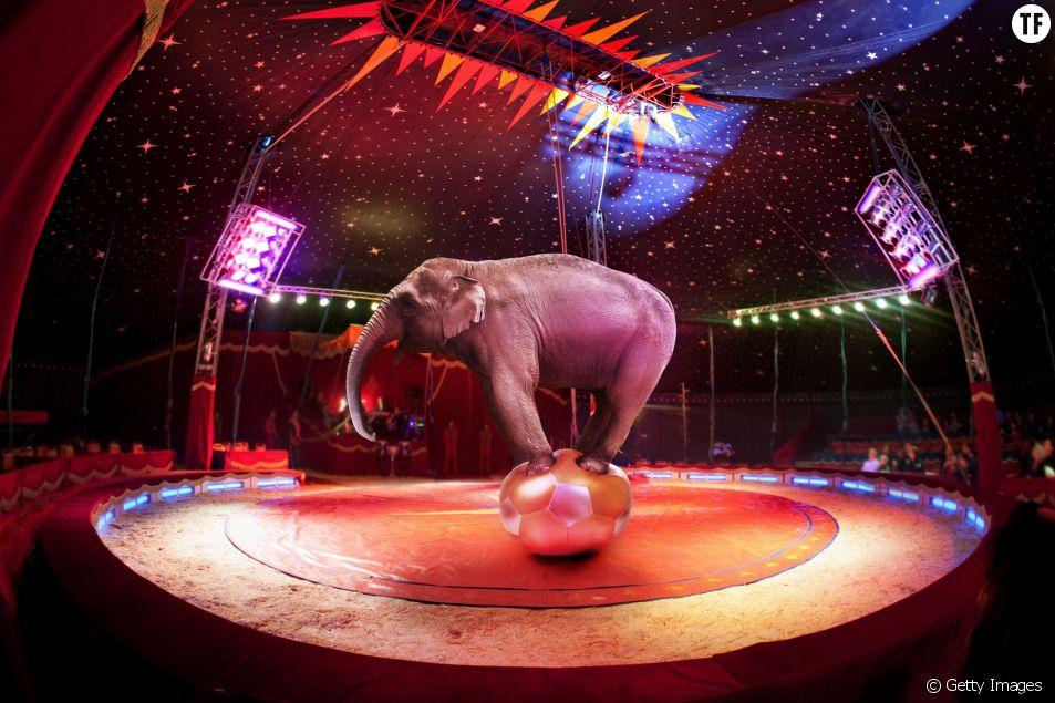 L'Irlande interdit les numéros de cirques mettant en scène des animaux sauvages