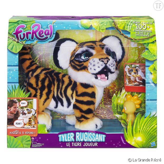 Tigre tyler rugissant
