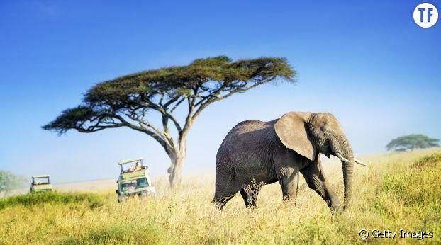 Un safari en Tanzani.