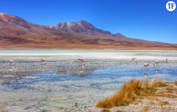 Le désert de sel de Bolivie.