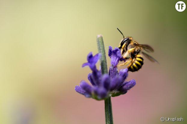 Comment protéger nos abeilles ?