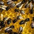 Comment protéger efficacement nos abeilles