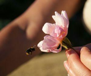 4 astuces pour protéger les abeilles à notre petit niveau