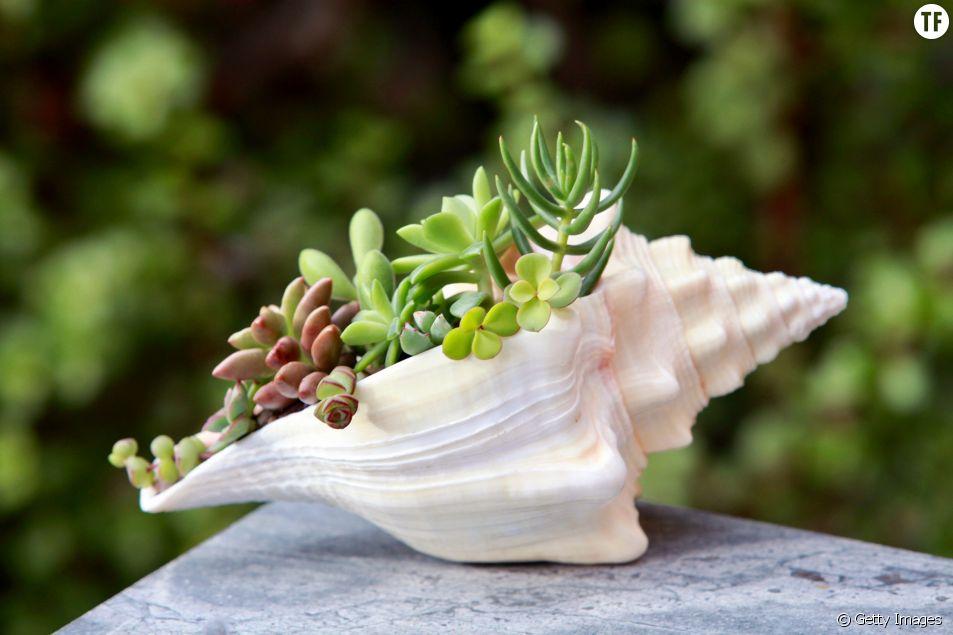 Les plantes comme souvenir de vacances