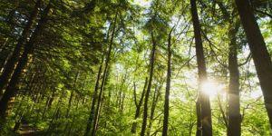 Fuck For Forest : du porno green pour sauver la planète
