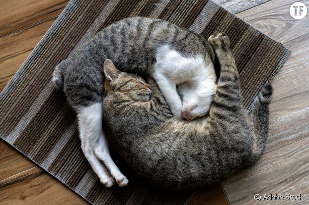"Le câlin façon ""yin yang"" (tellement compliqué que seuls les chats la tentent)"