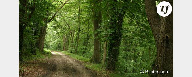 Forêts de l'Essonne : appel à témoins pour arrêter le violeur des bois