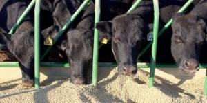 Farines animales : réintroduction partielle en France ?