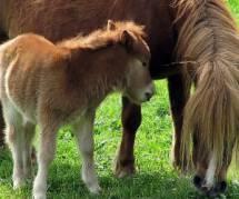 Elections USA : un poney pour tout le monde !