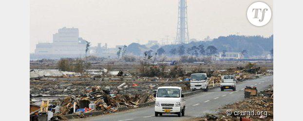 Fukushima : des singes pour mesurer la radioactivité des zones contaminées