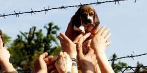 Défense des animaux : Mobilisation pacifique au Trocadéro le 8 mai 2012