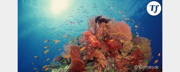 Des océanographes alertent sur la disparation des récifs coralliens