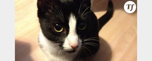 Vidéo Lolcats : le 1er festival mondial du film de chats cet été