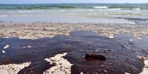 Marées noires : un composant du chocolat pour dissoudre le pétrole