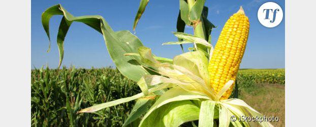 """""""Tous cobayes !"""" : l'enquête-choc qui révèle le scandale sanitaire des OGM"""