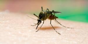 Cambodge : le SMS, nouvelle arme contre le paludisme