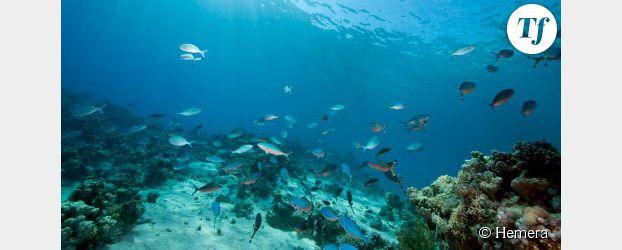 Quand les océans se réchauffent, les poissons rétrécissent