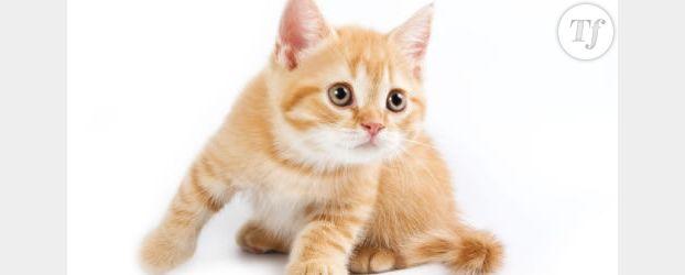 Insolite : un chat kleptomane sévit dans un quartier de San Francisco en vidéo