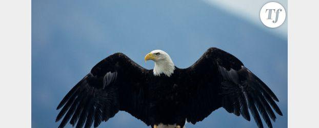 Un aigle enlève un enfant dans un parc - Vidéo