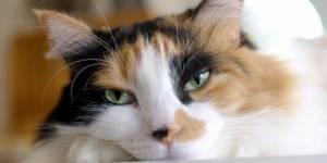 Ronron thérapie : les vertus du chat contre le stress, l'hypertension et l'insomnie