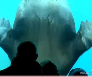 Capital : A la découverte des zoos et des parcs d'attraction sur M6 Replay / 6Play