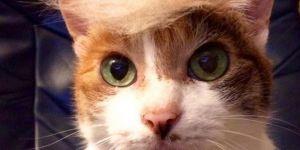 Peigner son chat en Donald Trump, la nouvelle tendance qui décoiffe