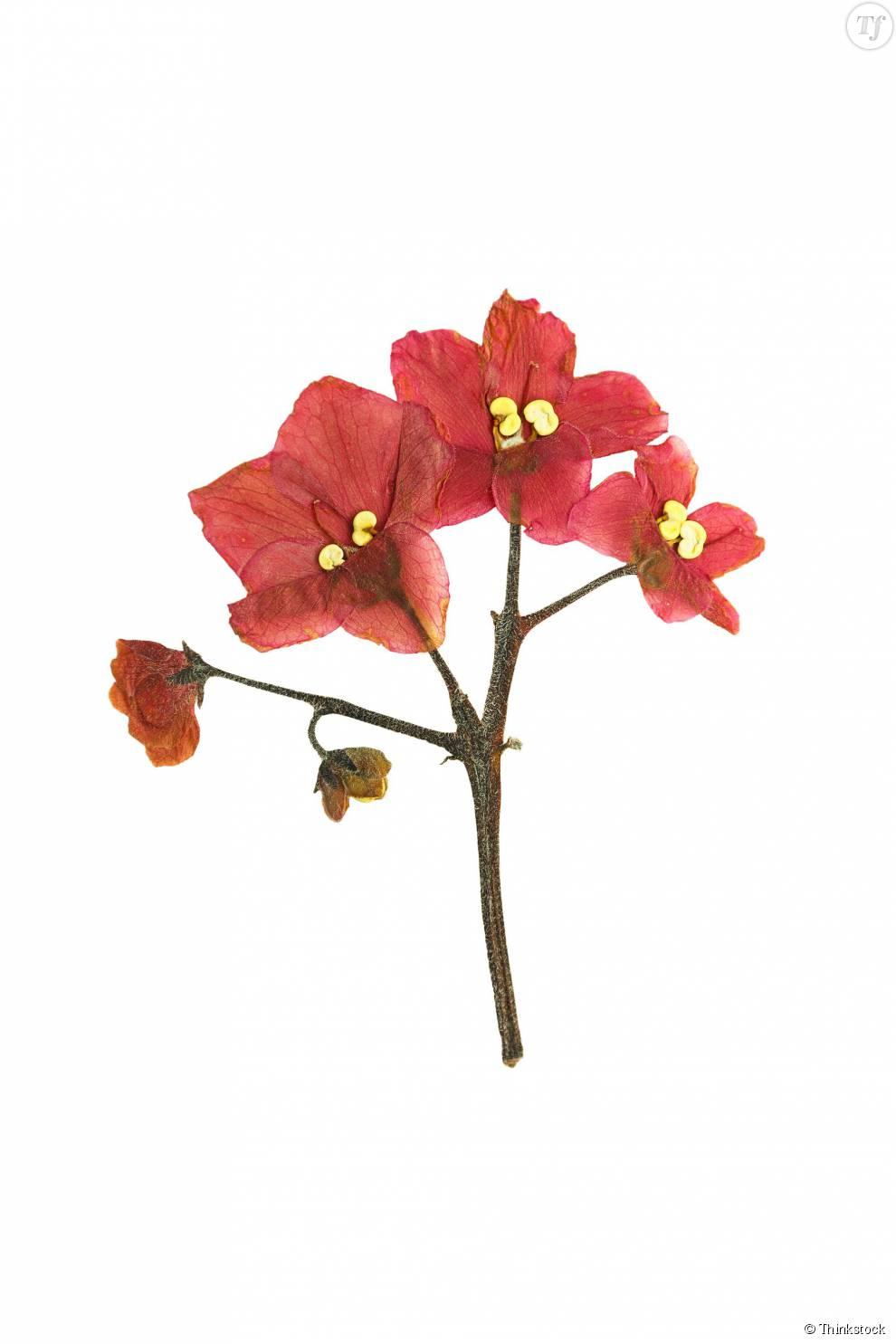 Des fleurs s ch es pour un tatouage ph m re et colo for Fleurs et fleurs