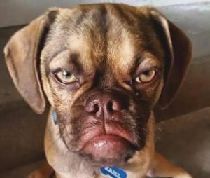 Earl The Grumpy Puppy : va-t-il voler la vedette à Grumpy Cat ? (photos)