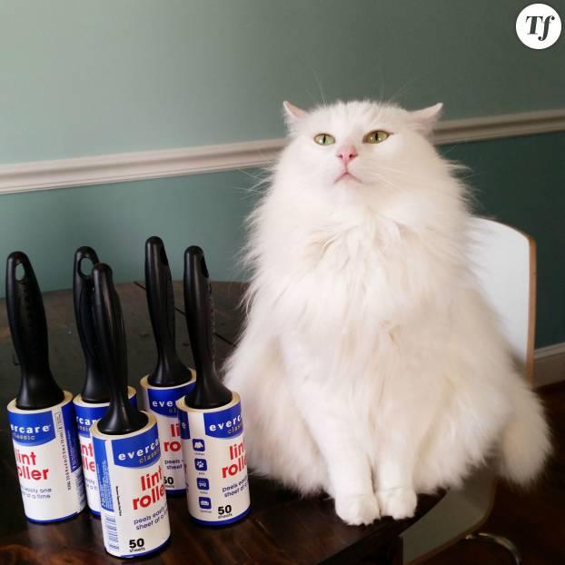 Funny White Cat Meme : Comment nettoyer son appart quand on est flemmarde le