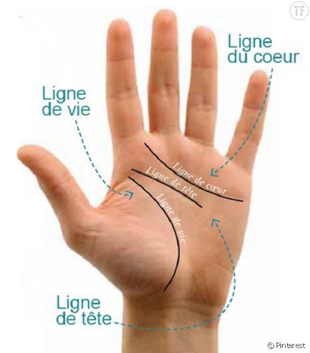Voici un schéma très simple pour repérer les lignes de la main et leur signification.