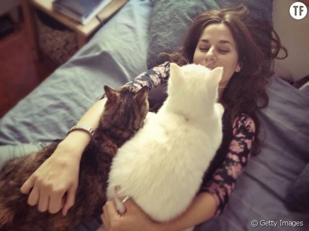 L'étude ne dit pas si votre QI augmente avec le nombre de chats !