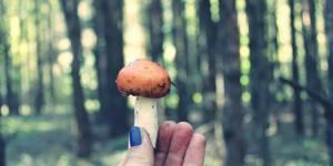 Les champignons hallucinogènes, remède miracle contre la dépression ?