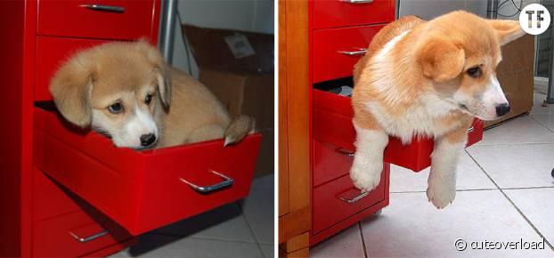 Ce chien a bien évolué mais reste dans son petit tiroir.