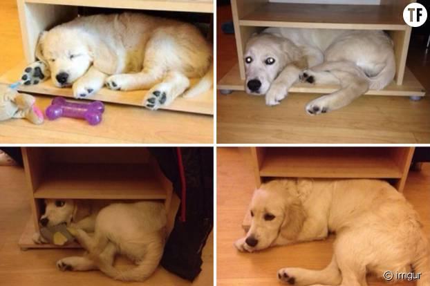 Un labrador qui 1 an plus tard ne renonce pas à son endroit préféré