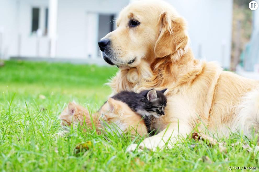 Des solutions 100 naturelles pour repousser les puces de vos chats et chiens terrafemina - Remede contre les puces ...
