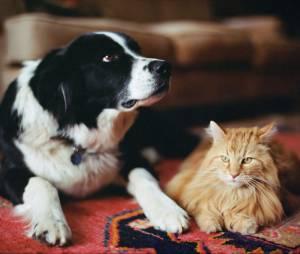 7 remèdes naturels contre les puces des chats et des chiens