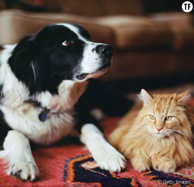 7 rem des naturels contre les puces des chats et des chiens terrafemina - Remede contre les puces de chat ...