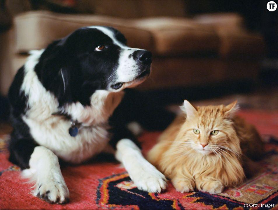 Remèdes naturels contre les puces des chats et chiens sans produits chimiques