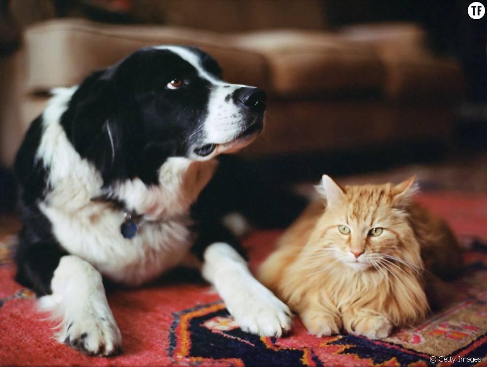 rem des naturels contre les puces des chats et chiens sans produits chimiques terrafemina. Black Bedroom Furniture Sets. Home Design Ideas