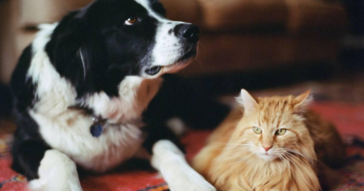 7 rem des naturels contre les puces des chats et des chiens terrafemina - Remede contre les moucherons ...
