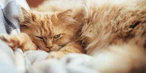 Pourquoi les chats nous snobent : on a (enfin) l'explication scientifique
