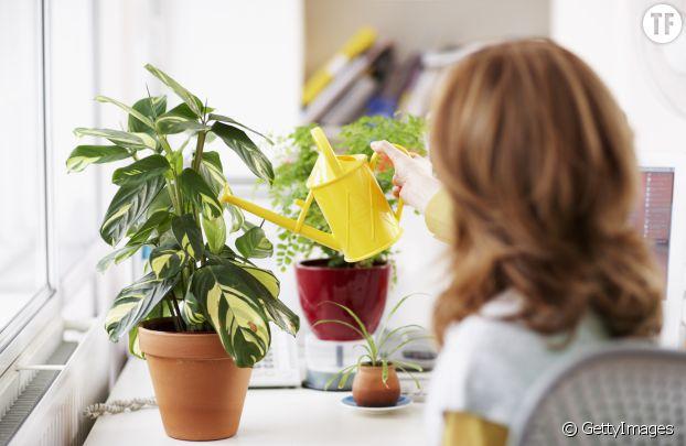 Décorer son bureau de plantes vertes pour booster sa productivité