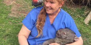 Cette femme a le meilleur job du monde : sauveteuse de wombats