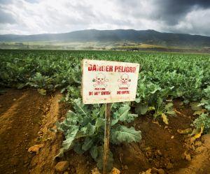 Pesticides : une nouvelle étude alerte sur les dangers pour la femme enceinte