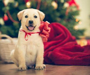 Non, les animaux ne sont pas de super cadeaux de Noël