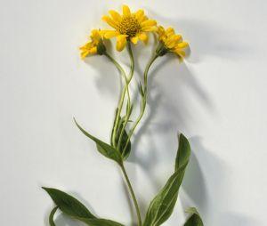 5 plantes magiques pour nous protéger cet hiver