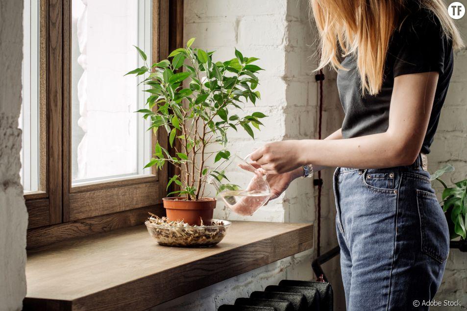 7 astuces pour que mes plantes ne décèdent pas pendant mes vacances