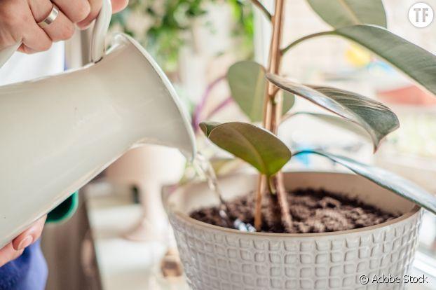 Comment garder ses plantes en vie pendant les vacances : tout un programme