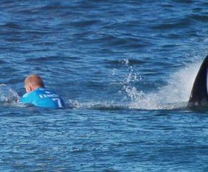 Un surfeur australien attaqué par un requin en direct : la vidéo terrifiante